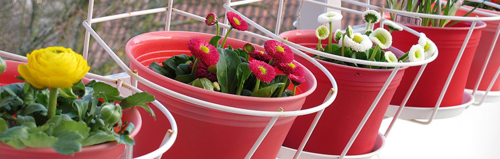 Wieszanie Skrzynki Na Kwiaty